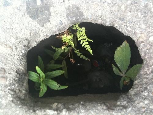 Flora subterana a Devei