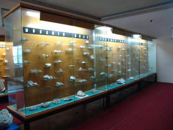 Exponate Muzeul Aurului Brad