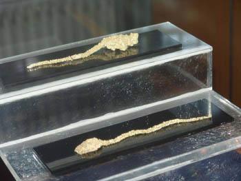 exponate aur